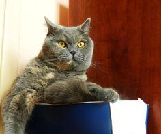 Kot i pudełko The ca