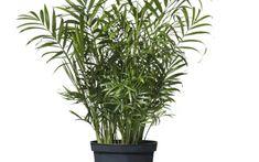 8 szobanövény, ami a legsötétebb sarokban is él és virul | Nosalty Plants, Plant, Planets