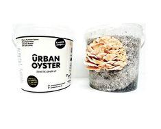 Picture Mushroom Grow Kit, Creative Food, Compost, Oysters, Stuffed Mushrooms, Tableware, Gourmet, Stuff Mushrooms, Dinnerware