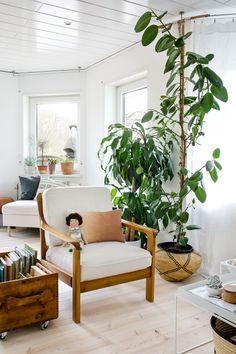 675 best plants images in 2019 interior plants living room home rh pinterest com