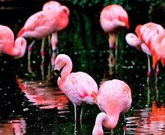 Flamingo Friday!