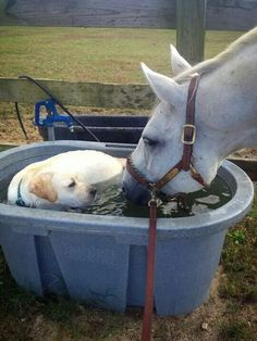 This dog wonders why this horse is drinking his bath water.