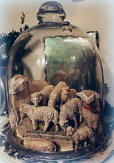 Old Nativity and Putz Sheep Under A Cloche.
