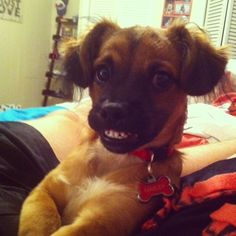 20 Stupidly Photogenic Animals... HAHAHA This had me laughing for days..