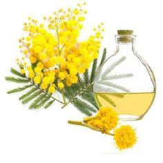 Esencia aromática de Mimosa. Floral, dulce, acompaña muy bien para hacer jabones, velas y perfumes, Disponible en Gran Velada, #diy