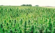 4 Best Reasons to Legalize Hemp  http://ecowatch.com/2015/04/20/reasons-legalize-hemp/… #MME #hemp #biofuel #vote