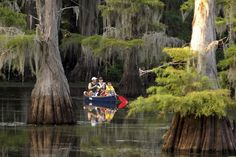 Caddo Lake State Park - A maze of bayous thick with ancient bald cypress trees and more than 70 species of fish. There's plenty to lure you to the only natural lake in Texas.