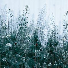 ぺんぺん( )     この間載せたぺんぺんの視点違いの写真  #噤んで隠して #nat_archive#goexplore#macrophotography#naturephotography#instagoodmyphoto#artofvisuals#lifeofadventure#ig_captures#igmasters#bokehlights#landscape#オールドレンズ#とても寂しいよ by sse0055
