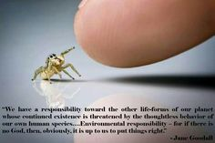 We have a responsibility toward the other life-forms of our planet whose continued existence is threatened by the thoughtless behavior of our own human species...Environmental responsibility - for if there is no God, then, obviously, it is up to us to put things right. Jane Goodall