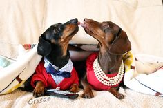 Pooches smooches (Crusoe and his date)