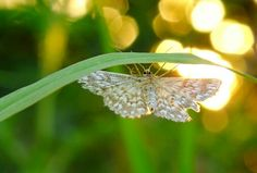 tsū is a free social network and payment platform that shares up to 90% of revenues with its users.You can register here : tsu.co/iammiky #tsu #tsū #social #network #users #free #friends #originalcontent #nature #bokeh #closeup #butterfly #light #garden