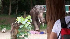 Would u like a massage? Chiang Mai Elephant, Elephant Camp, Massage, Camping, Animals, Campsite, Animales, Animaux, Animal