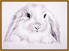 dibujos-de-conejos-a-lapiz-fáciles.jpg (594×445)