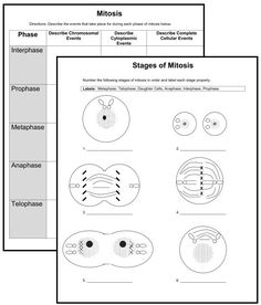 mitosis and meiosis google search school biology pinterest google searching and school. Black Bedroom Furniture Sets. Home Design Ideas