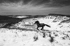 Saatchi Online Artist: Drew Doggett; Digital, Photography Untitled 6 (Horse Running on Snowy Mountain) #snow #landscape #horse #photography #mountain