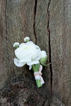 ribboned ranunculus button hole by www.passionforflowers.net