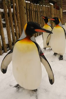 Everyday in Jan. & Feb. our penguins parade at 10am & 2:30pm