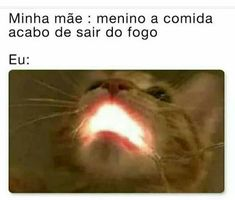 75 memes engraçados para alegrar a sua semana! Lol Memes, Funny Memes, Haha Funny, Funny Cats, Hilarious, Insta Memes, Curious Creatures, Comedy Central, How To Speak Spanish