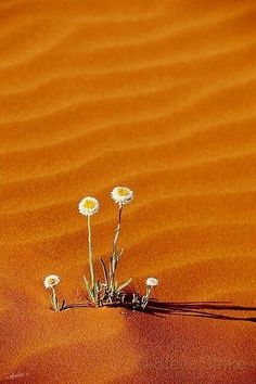 Orange Sand and Flowers by Steve Strike Foto Nature, Beautiful Flowers, Beautiful Pictures, Deserts Of The World, Desert Flowers, Desert Plants, Desert Life, Amazing Nature, Belle Photo