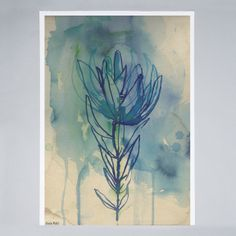 Sweet William - Blue Wash Protea - Poster
