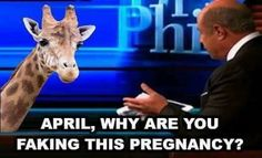 April the Giraffe on Dr. Phil!