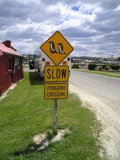 ニュージーランド, ペンギン, 交通標識