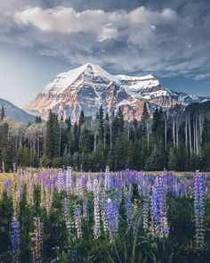 The most beautiful places in Canada: Canada is a country in the northern part of North America.The most beautiful places in Canada. Hiking Photography, Landscape Photography, Nature Photography, Prado, Amazing Pics, Beautiful Pictures, Beautiful World, Beautiful Places, Vancouver