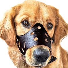 Dog Muzzle Leather, Adjustable Anti-biting Dog Leather Muzzle, Breathable Safety Pet Puppy Muzzles Mask for Biting and Barking (stop dogs from biting, barking, and chewing) -- Check out the image by visiting the link. (This is an affiliate link) Pitbull, Schnauzer, Rottweiler, Stop Dog From Biting, Anti Aboiement, Dog Muzzle, Dog Dental Care, Dog Food Storage, Aggressive Dog