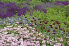 Monarda bradburiana, Allium atropurpureum, Amsonia tabernaemontana, Salvia 'May Night' and 'Blue Hill'. Lurie Garden