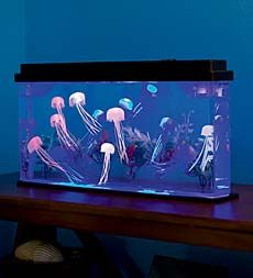 giant-jellyfish-aquarium