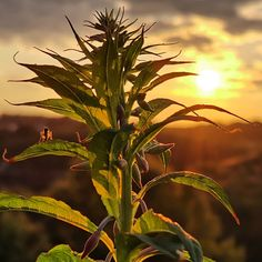 Nature Sunset, Nature, Plants, Photography, Naturaleza, Photograph, Fotografie, Photoshoot, Sunsets
