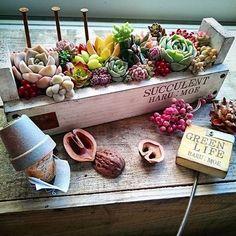 やっと寄せられた @riemaruko りえちゃんプランター。:+((*´艸`))+:。 豪華にめいっぱい寄せてみました 屋号(?)のharu:moeを入れてもらったから、 イベントの看板に持っていきます✨✨ #多肉植物#多肉#多肉バカ同盟#新潟タニラーの会#寄せ植え#ウッドプランター#七福神#クーペリー#だるま秋麗#カメレオン錦#春萌#harumoe_yuki