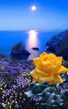 Beautiful Rose Flowers, Beautiful Flowers Wallpapers, Beautiful Moon, Romantic Flowers, Flowers Nature, Beautiful Images, Flower Phone Wallpaper, Butterfly Wallpaper, Cute Wallpaper Backgrounds