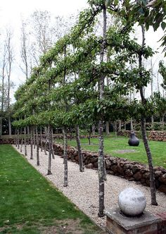 20070414_0210 Pear trees at Larundel by williewonker, via Flickr