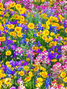Lot of Flowers.