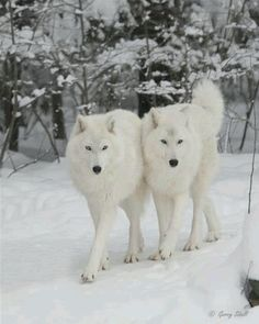 Ik wou dat ik twee hondjes was...
