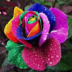 Colorful Flower by Junaid Raza