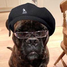 Funny Samuel L. Jackson dog costume. #halloween #dogcostume #funny #samuelljackson