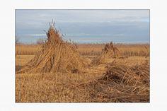 De Wieden, natuurgebied in de kop van Overijssel. Gefotografeerd door Edwin