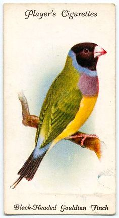 Player's Gouldian Finch cigarette card