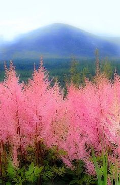 Enache Amalia -Mourne Mountains, N. Ireland