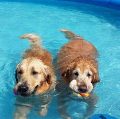 Always swim with a friend