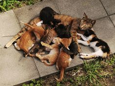 Mummy looks so happy with her kittens