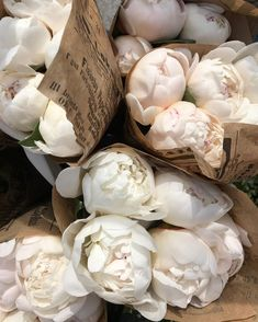 Spaece - Growing Peonies - How to Plant & Care for Peony Flowers
