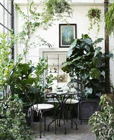 Neptune provence tea for two set small space gardening, indoor gardening, interior garden, Interior Garden, Interior Plants, Design Jardin, Garden Design, Plantas Indoor, Green Velvet Sofa, Room With Plants, Plant Rooms, Green Rooms