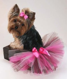 Trendy Shades Of Pink & Brown Dog Tutu and Matching Hair Bow