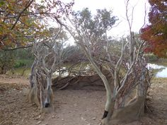 Bird Hide is an organic sculptural installation of branches and adobe nestled amongst trees on the edge of the Strathnairn dam to observe birds and wildlife. Near Canberra