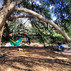 B.Y.O.H. Bring your own hammock. #UofSC #Horseshoe