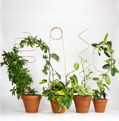 Your plant needs a little help ? So our stakes will be the perfect accessory ! This one is Arch, an elegant curve that guides a rod. Made of aluminum with a golden layer. It is 70 cm high and cm wide. Indoor Garden, Indoor Plants, Balcony Garden, Avocado Plant, Soil Layers, Plant Aesthetic, Plant Supports, Green Gifts, Plant Needs