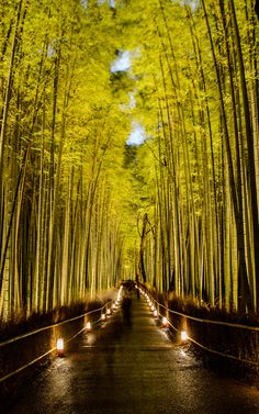 Sagano Bamboo Forest (Japan)